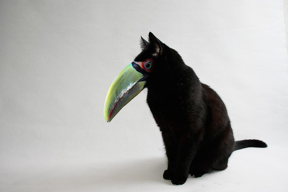 thais-Black-Cat-68pior